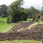 Potatoes are common crops in the cooler climate of the slopes of Volcán Turrialba