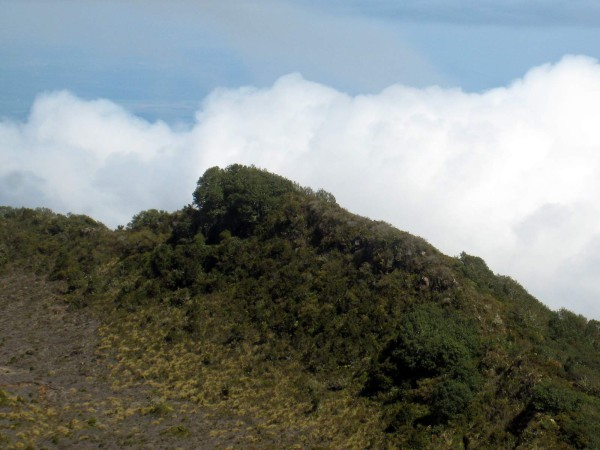 The trees stop abruptly at the crater rim, Volcán Turrialba National Park