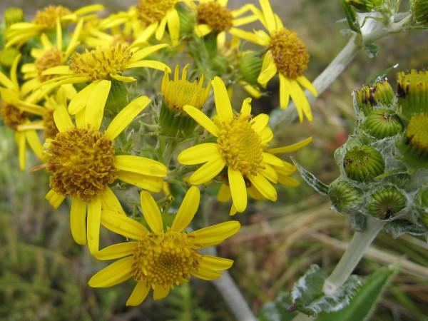 Daisy ? A the top of sendero mirador Volcán Turrialba National Park