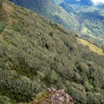 The elfin cloud forest climbs the slope above the rainforest a few thousand feet down in the background to the top and right. To the left is the treeless crater of Volcán Turrialba