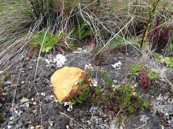 Sulfurous rock