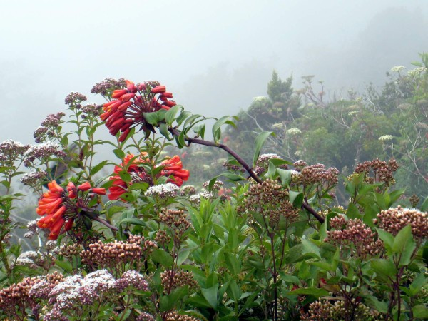 The flowers and hummingbirds were amazing along the last 800 meters of the 4WD road to the trailhead.