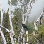 The flowers and birds were amazing along the last 800 meters of the 4WD road to the trailhead.