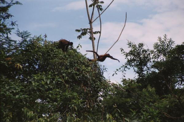 Launching Spider Monkey