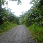 As we neared the end of the road in Suretka the jungle started to replace the banana plantations