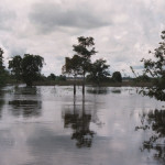 Seasonal flooding beginning each June changes the landscape dramatically in Caño Negro National Wildlife Refuge. If you look carefully to the right of the pair of trees at center you can see a Great Egret fishing where cattle may have grazed a few months earlier.