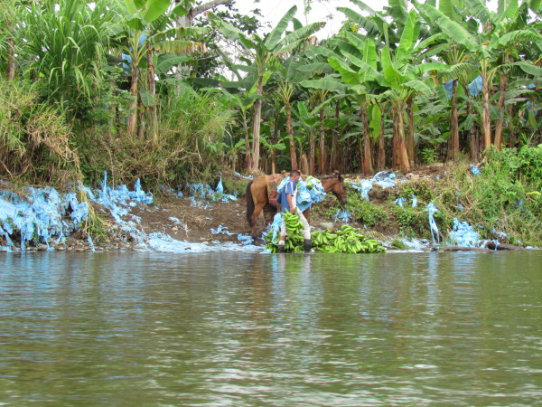 The blue plastic bags used by commercial plantations to concentrate pesticides
