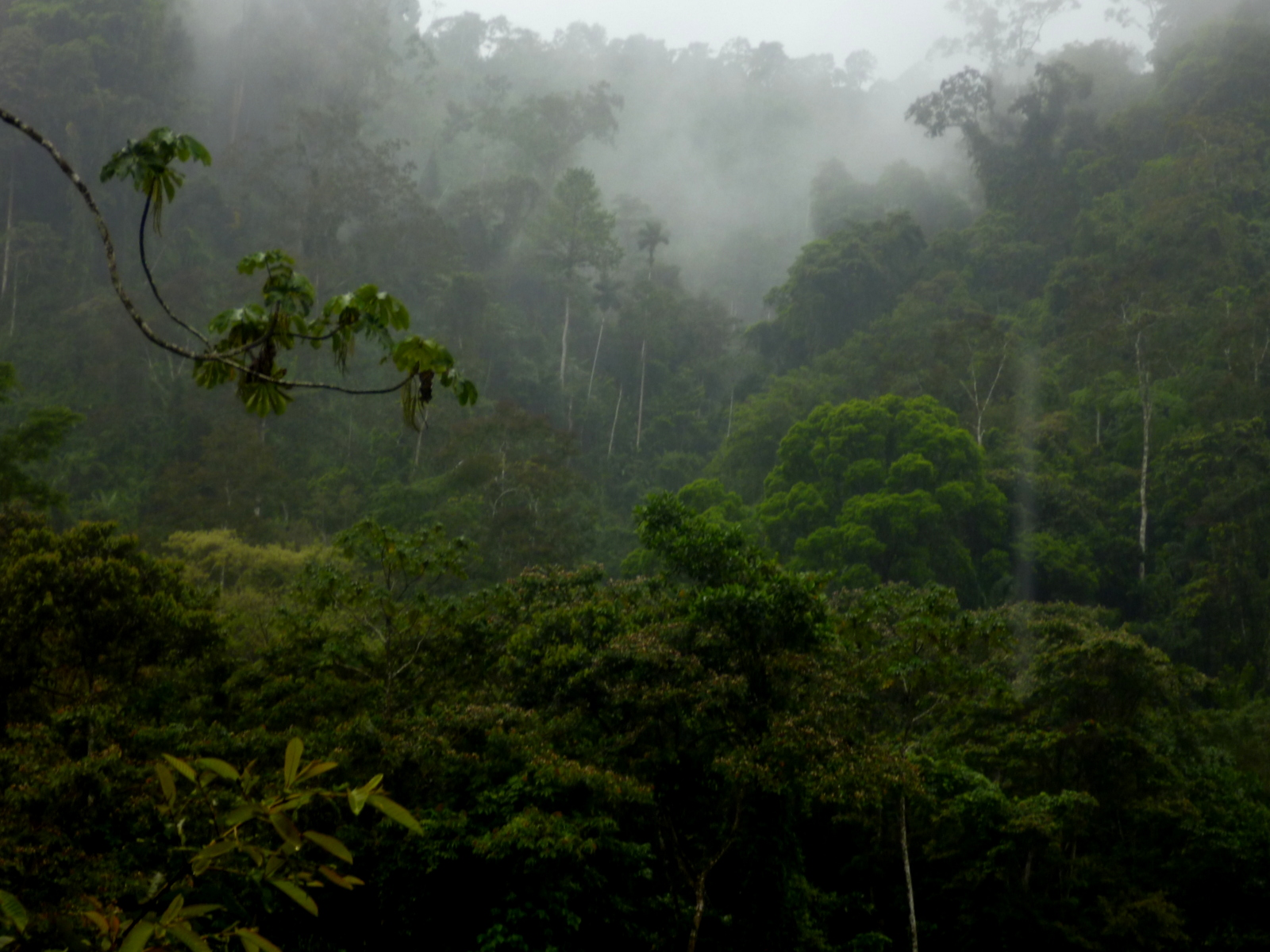 Uber Price Quote >> Misty rainforest