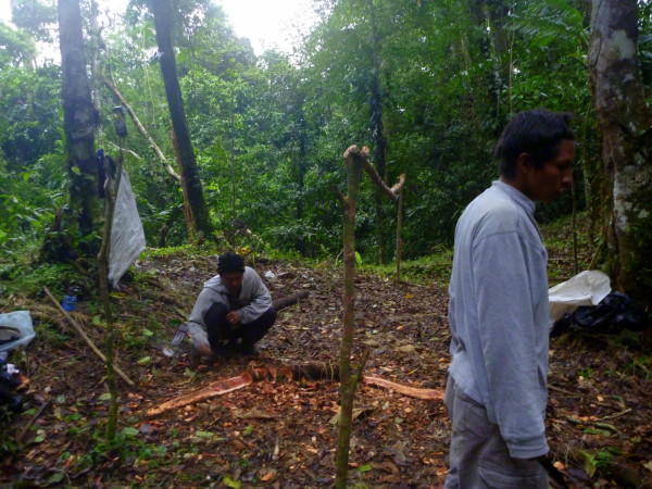 Using a machete to chop out a root under the otherwise flat spot where the porters set up their rain shelter.
