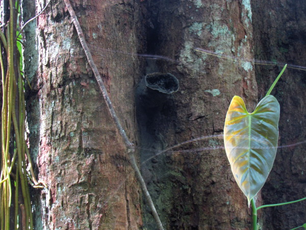 The streaks are bees zipping through the patch of sunlight in front of the entrance to their nest just above the center of the frame