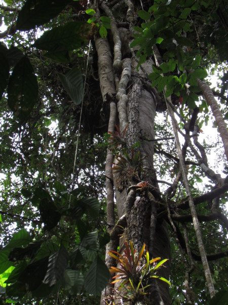 Epiphytes and vines