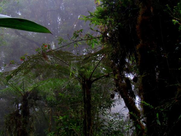 Ferns or cycads