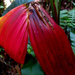 Red palm leaves