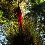 Epiphyte flower