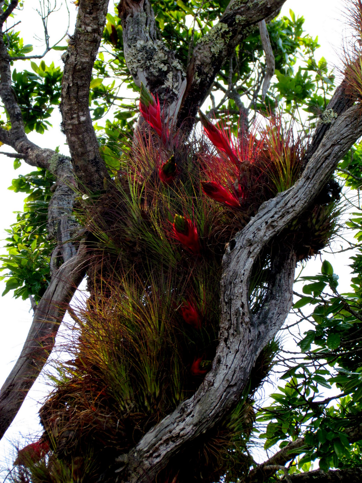 Uber Price Quote >> Epiphyte