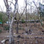 Ujarras school