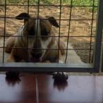 The greeter at La Gran Vista