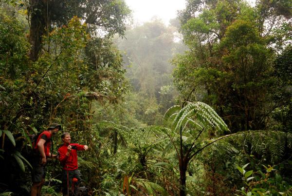 Steamy Jungle