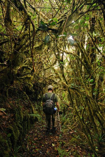 Moss tunnel