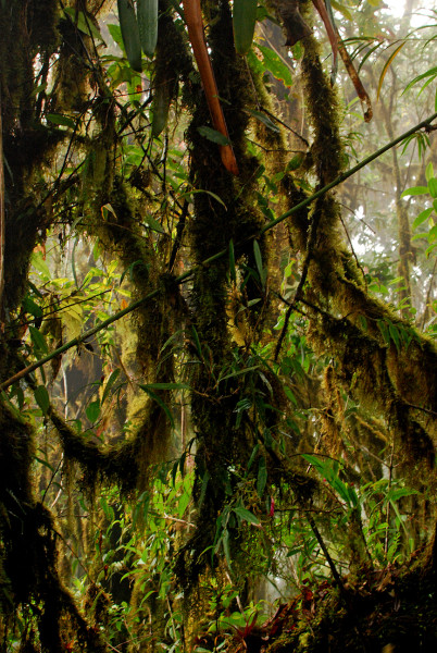 Moss and epiphytes cling to every surface in the cloud forest