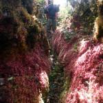 Pink moss crevasse