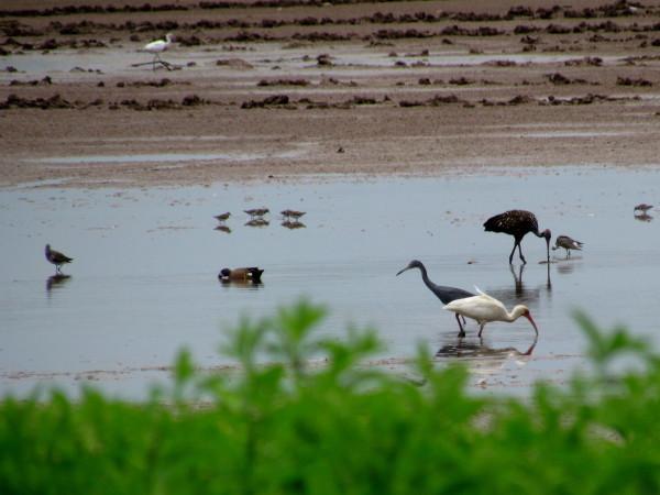 Many bird species