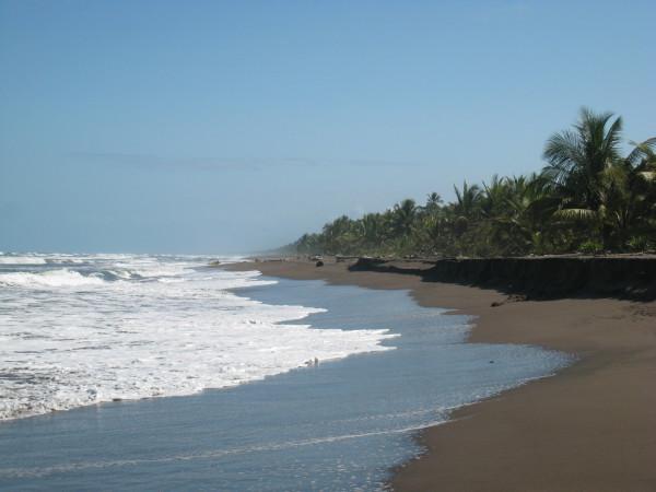 Playa Tortuguero