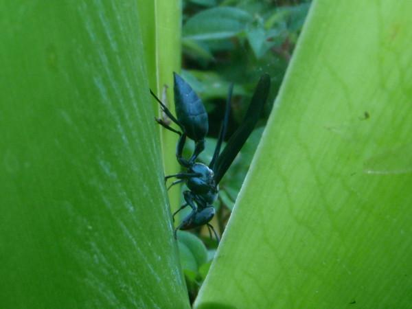 Green Hornet!