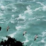 Sendero de Oro – La Leona to Drake Bay
