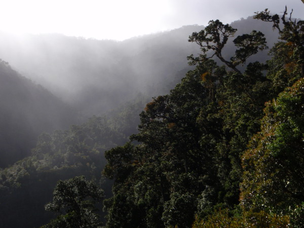 Cloud forest from our window at Dantica Lodge