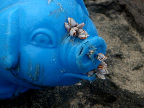Piggy bank washed ashore with barnacles