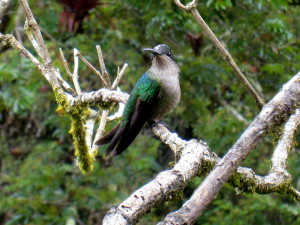Humming bird near San Gerardo