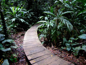 Many private trails in Costa Rica are paved or elevated like these between the hanging bridges at Tirimbina rainforest