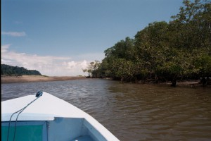 lancha in the mangroves