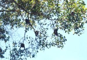 Monkeys over the road
