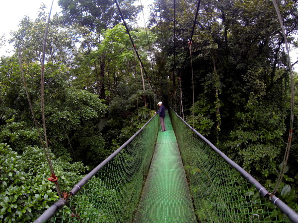 Suspension bridge banks of the Rio Sarapiqui
