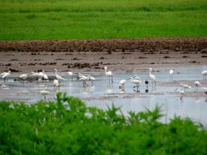Wetlands and mud flats at Cano Negro