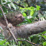 Best Places to See Monkeys & Sloths in Costa Rica