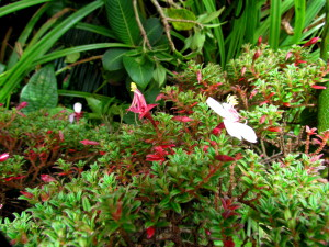 Flowering Paramo