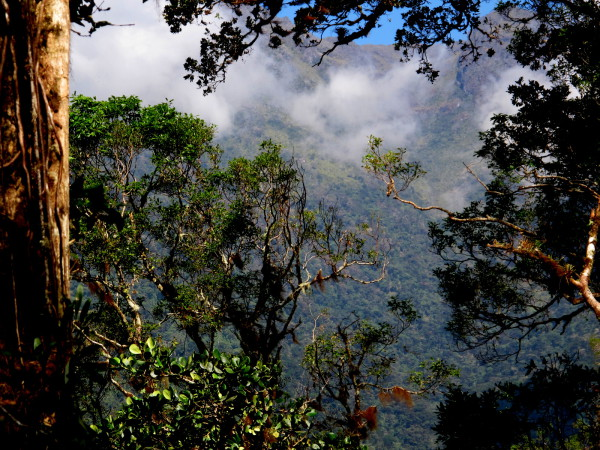 Clouds on Chirripo ridge line through epiphyte laden treetops