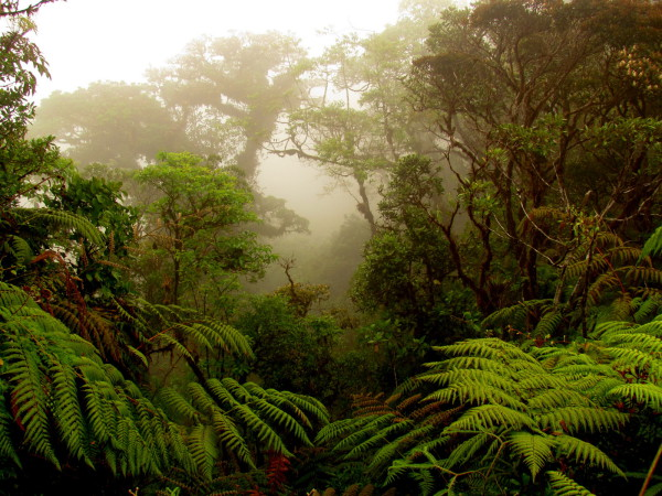 Cerro Amigos Cloud Forest Hike