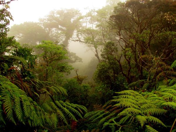 Cerro Amigos Cloud Forest Hike