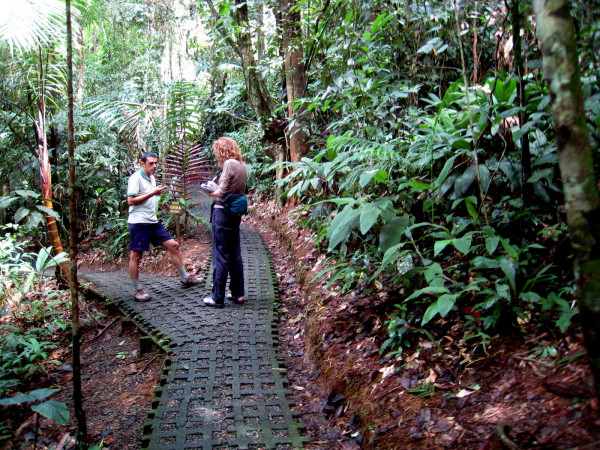 block paved trail through the rain forest
