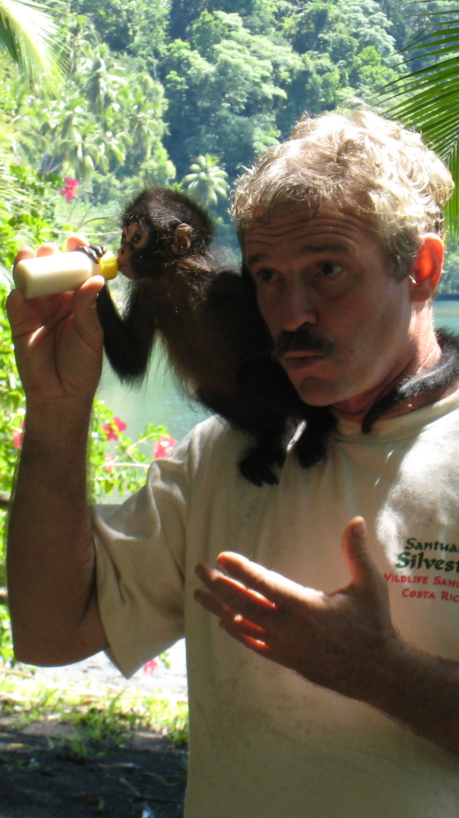 Baby Spider Monkey At The Osa Wildlife Rescue