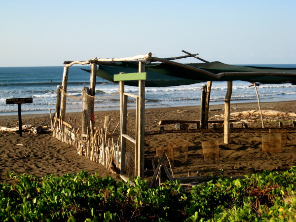 Sea turtle egg incubator, Playa Camaronal