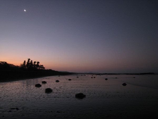By the time there was enough light to photograph, most of the estimated 8,000 turtles that had come ashore while we were there had returned to the Pacific ocean.