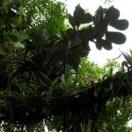 A M Brenes Biological Reserve