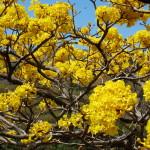 Lomas de Barbudal Biological Reserve