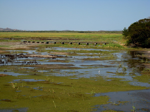 The observation pier at Palo Verde National Park
