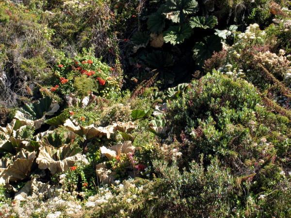 Sombrillos de pobre, Irazu National Park